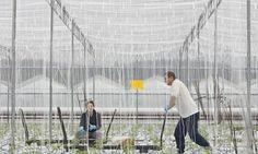 Economic benefits of eu Migrant Workers