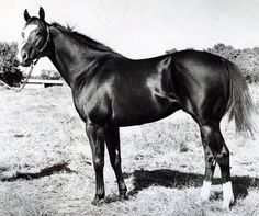 Although he was an AAAT runner and earned more than a substantial amount of money during his racing career, Top Moon did not make a name for himself until he was retired for breeding. Top Moon was inducted into the Hall of Fame in 1999. Learn more about the AQHA Hall of Fame inductees at http://aqha.com/en/Foundation/Museum/Hall-of-Fame/Hall-of-Fame-Inductees.aspx
