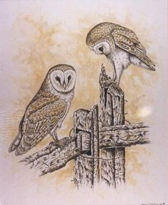Barn Owls - Artwork by Steve Tredinnick. Had to pin the barn owl picture since I am a crazy owl person