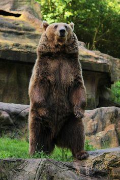 Bear 1 by landkeks-stock on deviantART