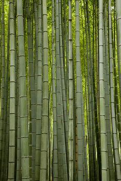 Bamboo Forest (vertical) by Freddy Monteiro Bonsai, Japan Garden, Whatsapp Wallpaper, Bamboo Crafts, Bamboo Tree, Nature Tree, Tree Forest, Kyoto Japan, Gras