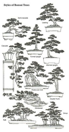 Styles & Shapes of Bonsai Trees really love the look of Bonsai trees.Please check out my website thanks. #Bonsai art