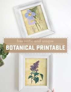 Four free Botanical