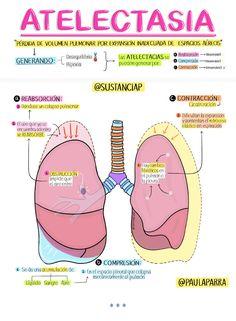 Medicine Notes, Medicine Student, Examen Clinique, Studying Medicine, Nursing Mnemonics, Nursing School Notes, Medical Anatomy, Med Student, Veterinary Medicine