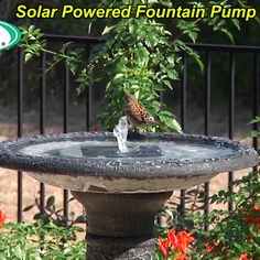 This fountain kit makes an affordable and efficient pump that requires no electricity or batteries, as it runs on solar power alone! ideas decoration decor Last OFF-Solar Powered Fountain Pump Lawn And Garden, Garden Art, Garden Design, Spring Garden, Bird Bath Garden, Diy Bird Bath, Dream Garden, Landscape Design, Lee Garden