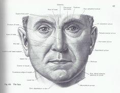 Facial surface landmarks