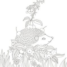 Secret Garden Coloring Book Safe Adult Pages Books Colouring Picture Gardens Ipad Case