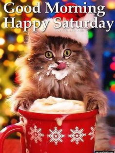 Happy Saturday! ❤️ Christmas Kitten, Christmas Animals, Christmas Humor, Merry Christmas, Christmas Coffee, Christmas Time, Christmas Morning, Christmas Wishes, Naughty Christmas