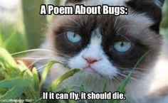 A poem from Grumpy.