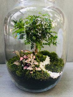 Decor Terrarium, Terrarium Jar, Terrarium Plants, Succulent Terrarium, Water Terrarium, Orchid Terrarium, Indoor Water Garden, Indoor Plants, Ideas Florero