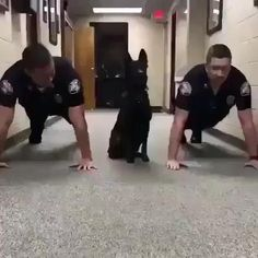 that is so cool. i wish my dog could do that. how long did it take the dog to do that? Cute Funny Dogs, Cute Funny Animals, Cute Animal Videos, Funny Animal Pictures, Gato Gif, Funny Dog Videos, Animal Jokes, Cute Little Animals, Service Dogs