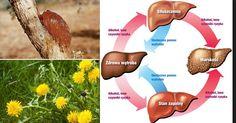 Top 10 ziół oczyszczających organizm i wspomagających leczenie