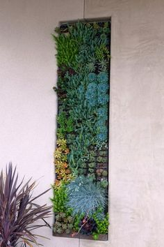 living vertical wall garden