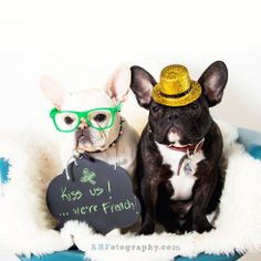 """""""Kiss us, we're French""""...""""even though it's St. Patrick's Day"""", confused but lovable French Bulldogs."""