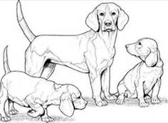 beagle Coloring Pages - Bing Images