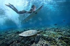 #underwater #surfing #duck dive