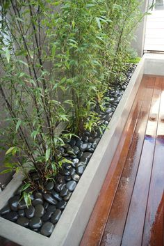 Raised concrete bamboo planter box with river rock. Modern landscape by Aloe Designs