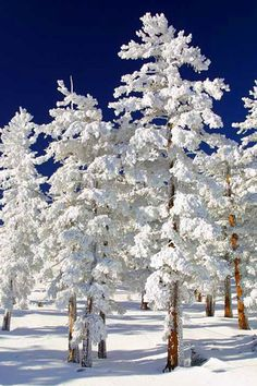 White Trees. So perfectly white, they almost look unreal. Absolutely awesome!!