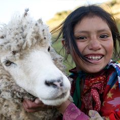 Sheep Gift Donations   Heifer International   Charity Ending Hunger And Poverty