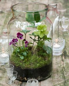 Glass Jar Terrarium London, U.-based author and green thumb Emma Hardy shares a DIY project from her latest book, The Winter Garden.London, U.-based author and green thumb Emma Hardy shares a DIY project from her latest book, The Winter Garden. Terrariums Diy, Terrarium Jar, Orchid Terrarium, How To Make Terrariums, Small Terrarium, Glass Terrarium Ideas, Water Terrarium, Ikebana, Deco Floral