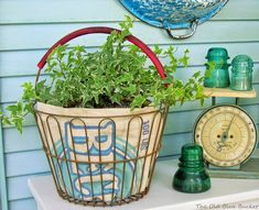 Old egg baskets can be used in many ways. I lined this one with an old feed sack and placed ivy in it. The Old Blue Bucket: Thinking Outside The Pot ~ Unique planters Ivy Plants, Egg Basket, Gardening For Beginners, Gardening Tips, Flower Gardening, Rare Flowers, Container Flowers, Wire Baskets, Garden Pots