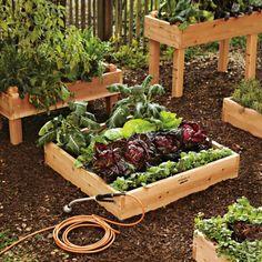 Start Planning Your Edible Garden.