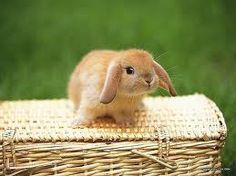 OMG  zo n schattige baby konijn