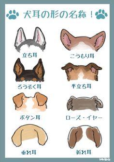 """Eddie Lee 脳 Thinking CLIP — highlandvalley: """"犬の耳の形やしっぽの形に名称がついてるのを調べるのが楽しい..."""