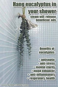I need to Hang eucalyptus in the shower