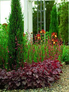 Front Garden Landscape, Garden Landscaping, Heuchera, Trees To Plant, Flora, Plants, Gardening, Front Yard Landscaping, Tree Planting
