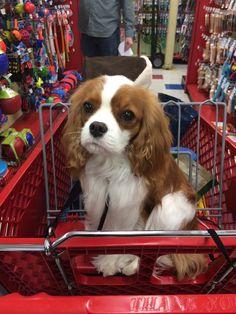 Shopping is hard work...
