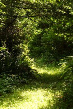 Secret Forest Path by PamplemousseCeil