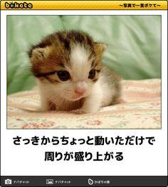 さっきからちょっと動いただけで周りが盛り上がる Cute Cats Photos, Cute Little Kittens, Cute Baby Animals, Neko, Funny Cats, Cute Babies, Kitty, Kawaii, Humor