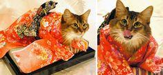Los gatos y los kimonos son dos cosas muy populares en Japón, así que era cuestión de tiempo para que los asiáticos los fusionen. A continuación te presentamos algunas de las fotografías más adorables que están empezando a circular en el internet asiático. Dale play a esta canción de 10 horas para mayor placer