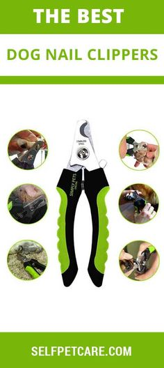 Our Experts Pick Up Top 10 Best Dog Nail Clippers in Make nail trimming a simpler process for you and your dog with this handy guide. Dog Nail Clippers, Rawhide Bones, Dog Spay, Dog Nails, Training Your Puppy, Dog Teeth, Outdoor Dog, Teeth Cleaning