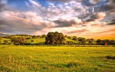 Скачать обои пейзаж, трава, природа, пастбище, луг, раздел пейзажи в разрешении 1920x1200