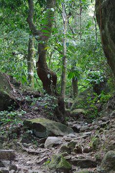 In the jungle in Panama