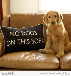 Funny Dogs on couch | No Dogs on this Sofa cushion on LOL Wall, by Mess in a dress