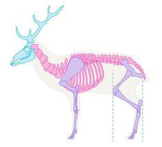 как рисовать оленя скелет - Поиск в Google