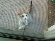 Let me in! #PicklestheDrummer #Cats #CuteAnimals #Pets #kitten #cutepets