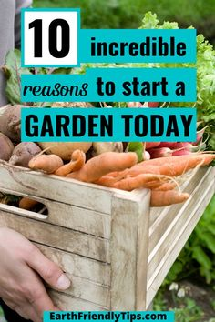 Are you thinking about starting a garden? Then you definitely need to check out these incredible reasons to start a garden today! You'll learn all about the amazing benefits of gardening and why you'll love having your own garden. Start reaping the benefits of gardening today when you discover the top 10 reasons why you should start a garden. Then discover all the tips you need to know to start your garden today. garden|gardening|benefits of gardening|start a garden|gardening for beginners Benefits Of Gardening, Reap The Benefits, Eco Garden, Green Living Tips, Starting A Garden, Help The Environment, Natural Parenting, Healthy Life, Healthy Living