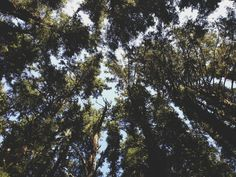 Oregon Coast- Cape Meares