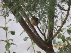 Pássaros da minha janela