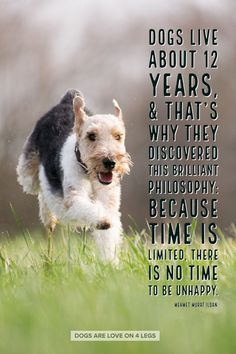 Dog Quote - Dogs live about 12 years... Dog, Dog Quotes Inspirational Quotes, Funny Quotes, Life Quotes