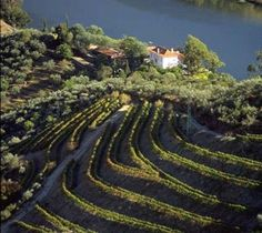 The Douro Valley, Portugal.   I dream of a lazy roadtripping wine tour....