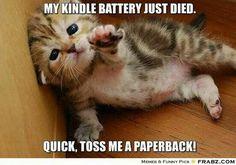 Listen to the kitten!