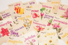 12. Hand painted font and florals in bright colors