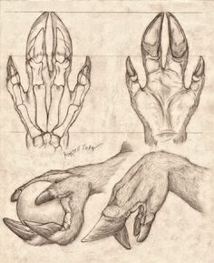 Lycanthrope Anatomy Top Image Row 2 Row 3 Row 4 Row Left, Right Row Left, Right Bottom Image Creature Drawings, Animal Drawings, Art Drawings, Creature Concept Art, Creature Design, Fantasy Creatures, Mythical Creatures, Dragon Anatomy, Monster Hands