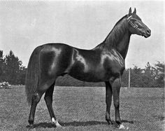 Trenton by Musket out of Frailty, born 1881, this is one hell of a beautiful horse!