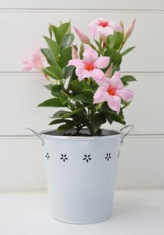 Send a plant and buy plant gifts delivered FREE Aust wide. Huge range of herb gardens and flowering plants. A plant gift that grows!